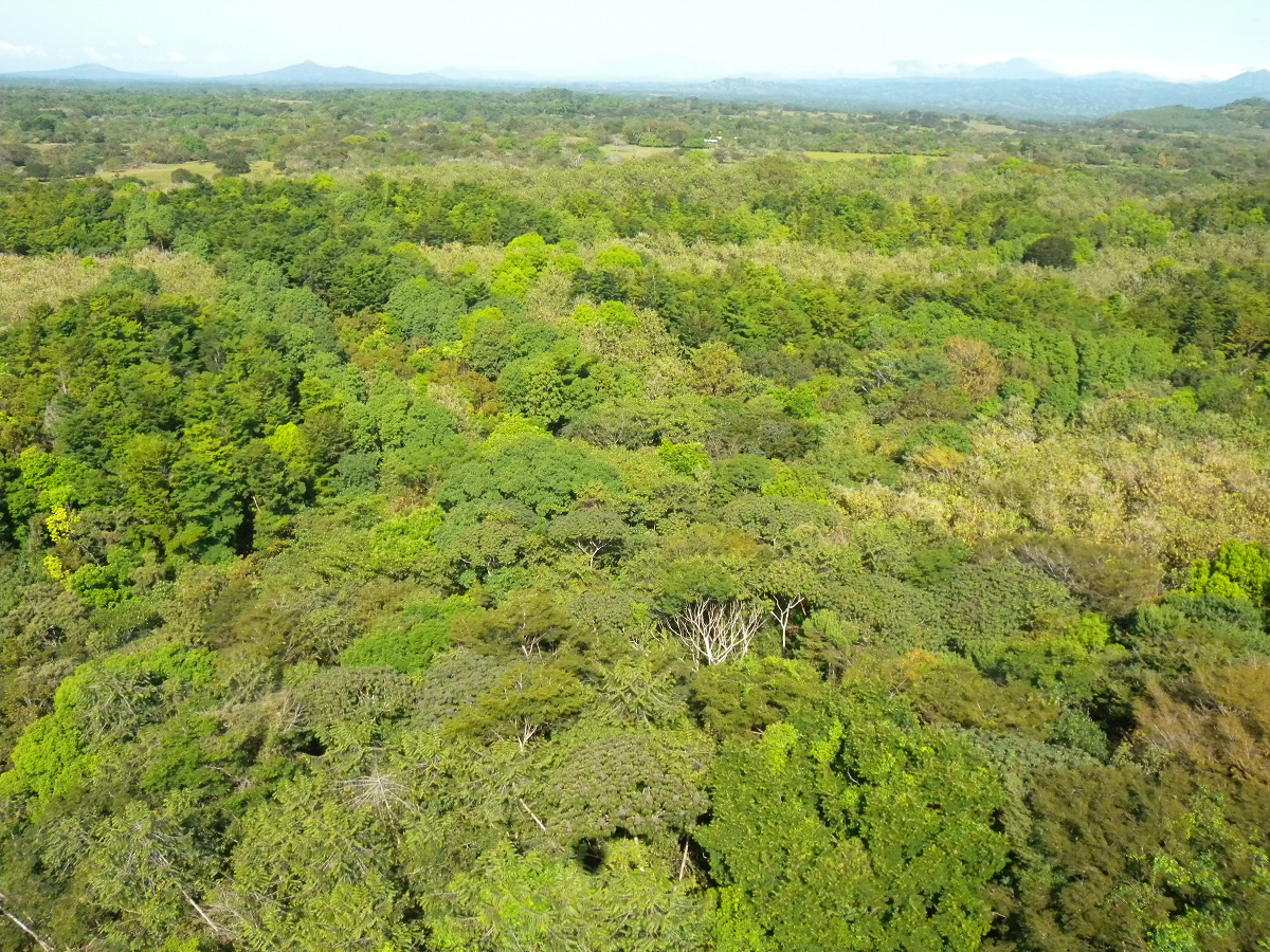 Mixed forest Panama