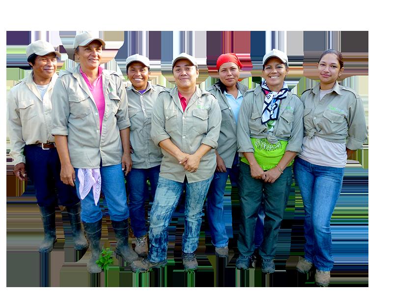 Group of employees, tree nursery