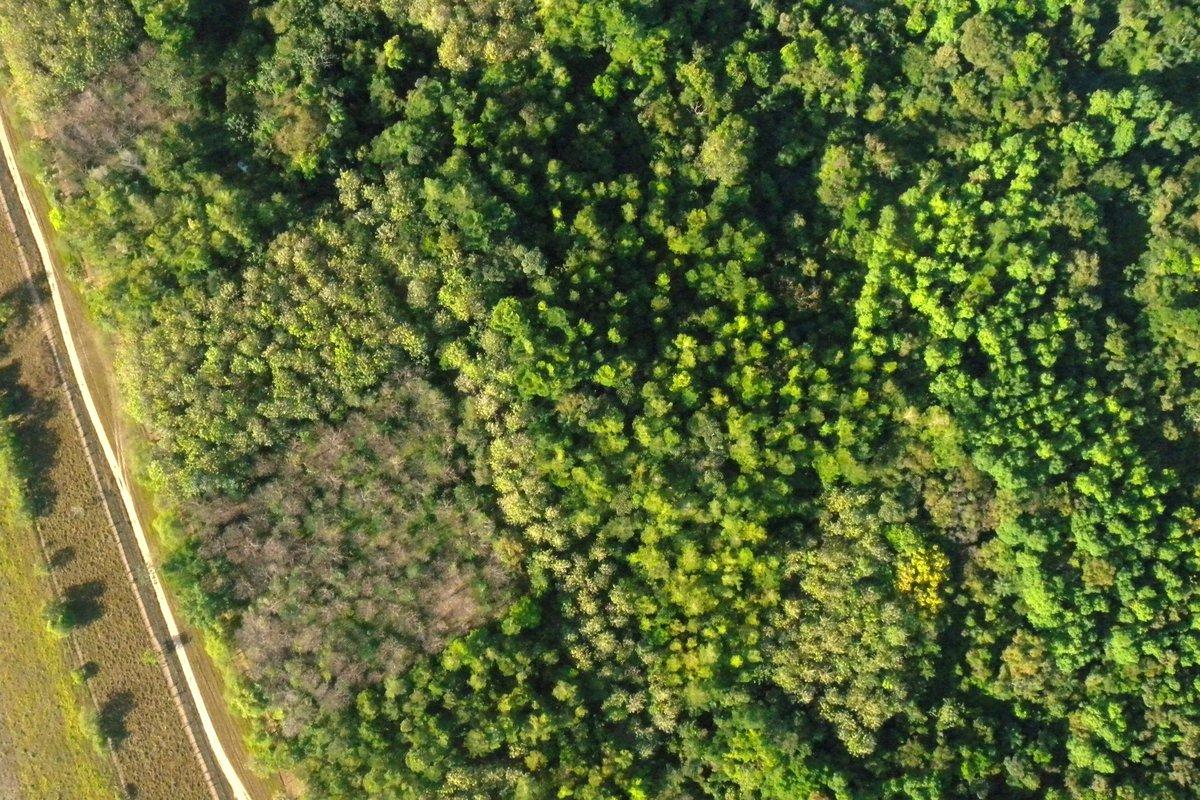 Ein Aufgeforsteter Mischwald von ForestFinance auf der Finca Los Rios I in Panama.