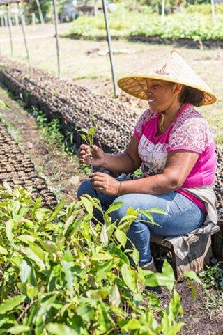 In den ForestFinance-Baumschulen in Panama werden Setzlinge einheimischer Baumarten herangezogen und später auf die Flächen verpflanzt.