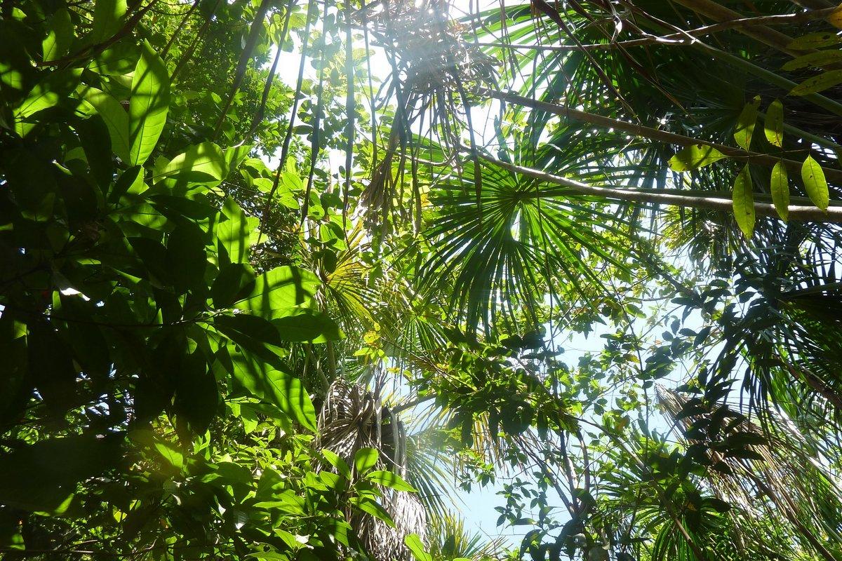 Ökologische Geldanlage - Wald in Panama