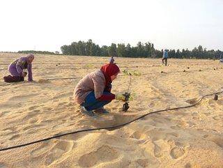 Die Implementierung eines Bewässerungssystems mit gereinigtem Abwasser