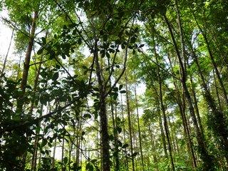 Wald, BaumSparVertrag