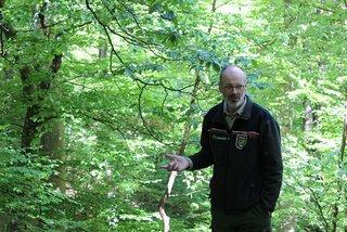 Mitinitiator Peter Wohlleben führt regelmäßig Besucher durch das Waldreservat.